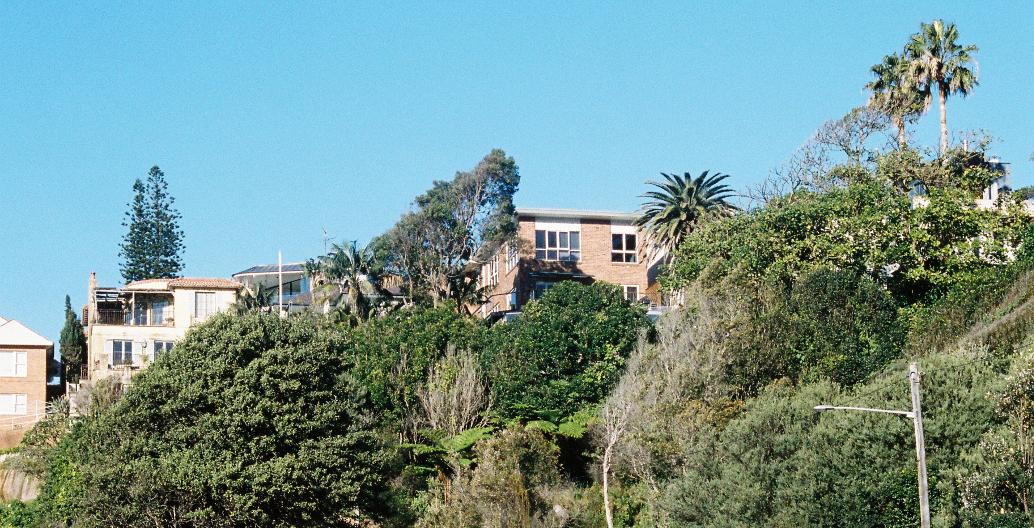 Examples of understory in Sydney
