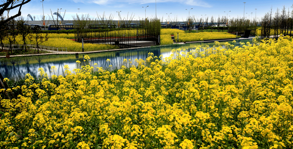 Houtan Park, Shanghai. A restorative design constructed wetlands over a former brownfield site. Image: Turrenscape.