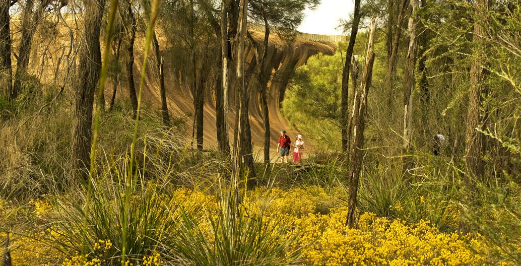 Wave Rock Wildflower trail. Image: Tourism WA.