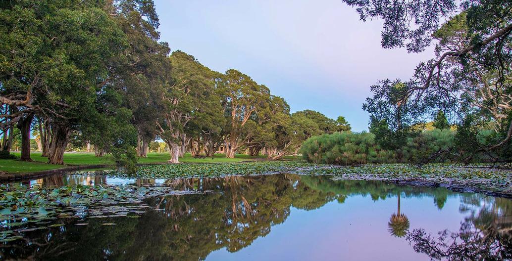 Sydney's Centennial Park at dusk.