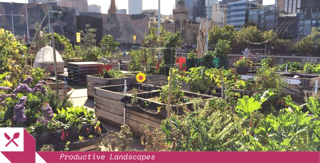 Pop Up Patch turned a disused carpark into 140 veggie crates. Image: Moreland Food Gardens Network