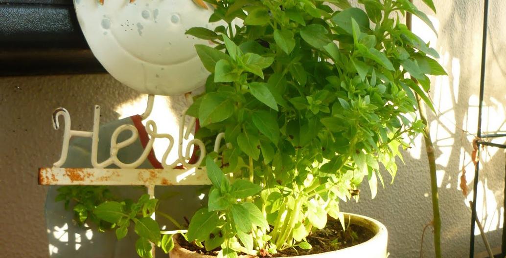 Balcony herbs. Image: The Edible Balcony.