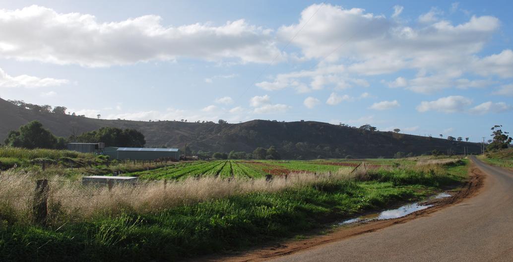 Productive farmland in Werribee.