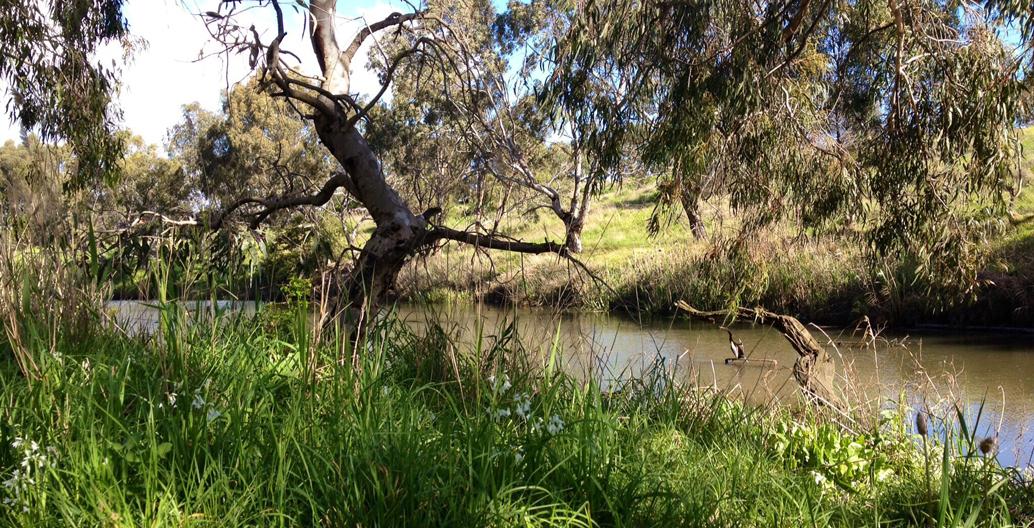 Kororoit Creek, Albion. Image: Reinthal
