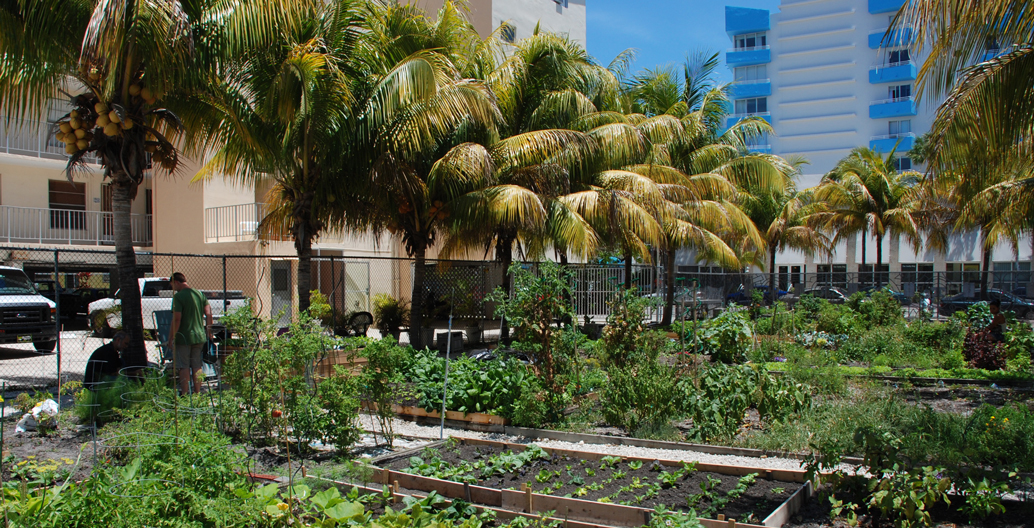 South Beach Community Garden, Florida.