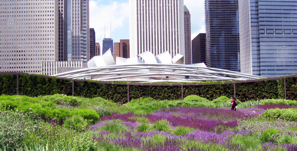 The vegetation of Chicago's Lurie Garden with Frank Gehry's Pritzker bandshell looming in the background.