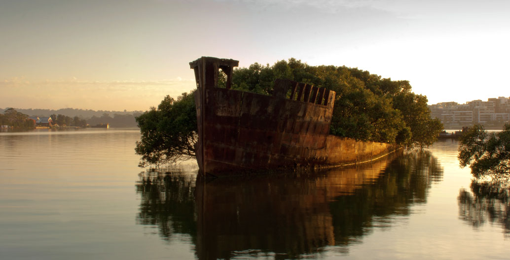 Sydney's Sydney's Homebush Bay has witnessed novel green developments, such as this unplanned shipwreck garden. Bay has witnessed novel applications of greening, with a shipwreck garden. Image: Jason Baker