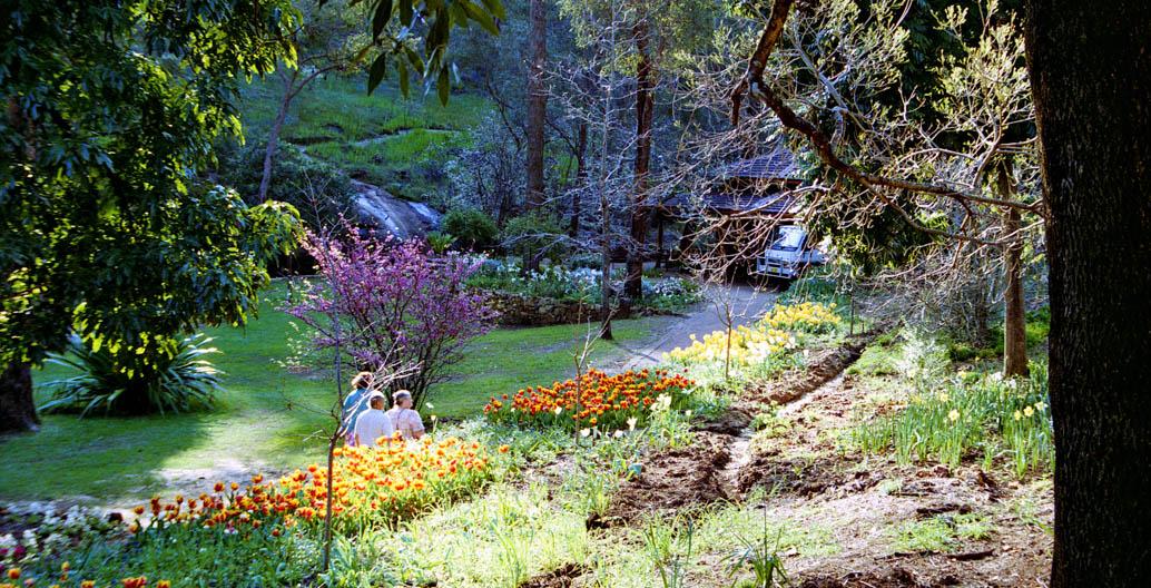 Thirsty tulips bloom at Araluen Botanic Park WA. Image: Jeff Crisdale