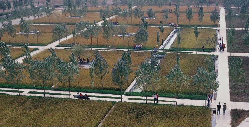 Shenyang Architectural University Campus agricultural landscape by Turenscape