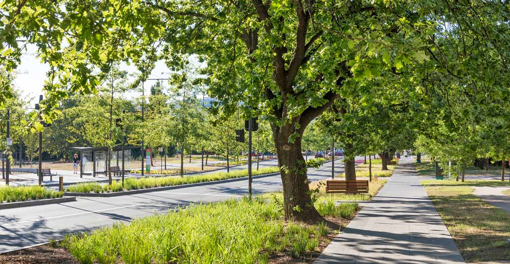 New plantings emphasis a sense of transition, and work with the existing street tree network. Image: John GollingsNew plantings emphasis a sense of transition, and work with the existing street tree network. Image: John Gollings