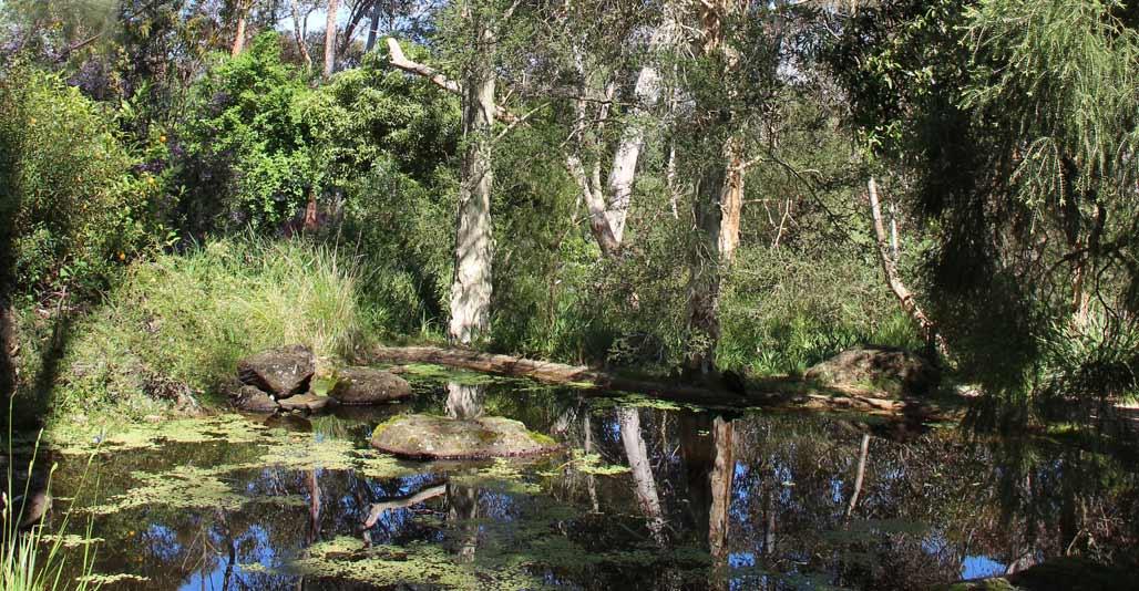 The pond at Gordon Ford's Fulling. Image: Annette Warner