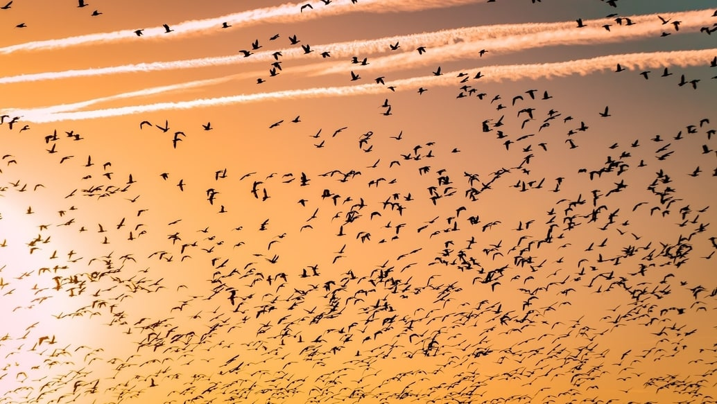 Light pollution affects migrating birds. Photo: Barth Bailey