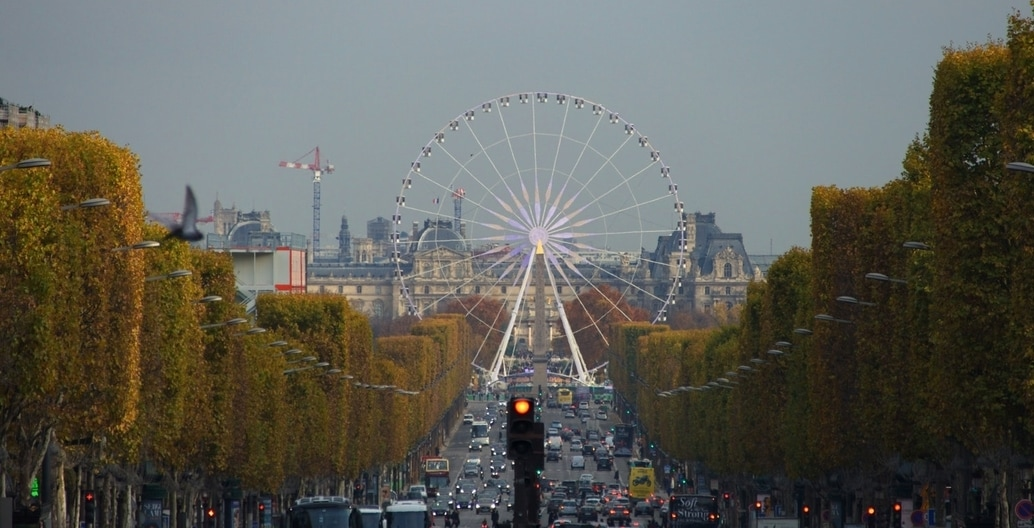 Paris iconic Champs Elysee is lined with sculpted trees, pleached by expert maintenance crews. Photo: Pascal Bernardon