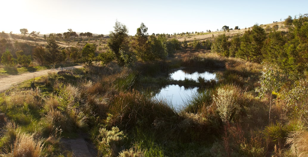 After: Creekline of a government-led residential estate, GbLA's Wanginu Park north of Melbourne has well-established native planting and surrounding grassland. Photo Andrew Lloyd