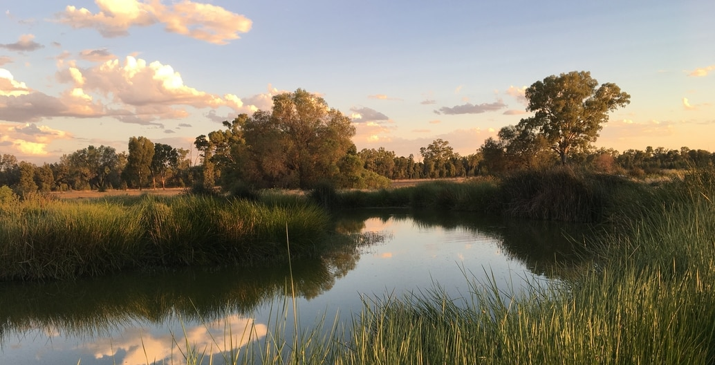 Charleville date farm: recycles all the town's wastewater through a wetland system.