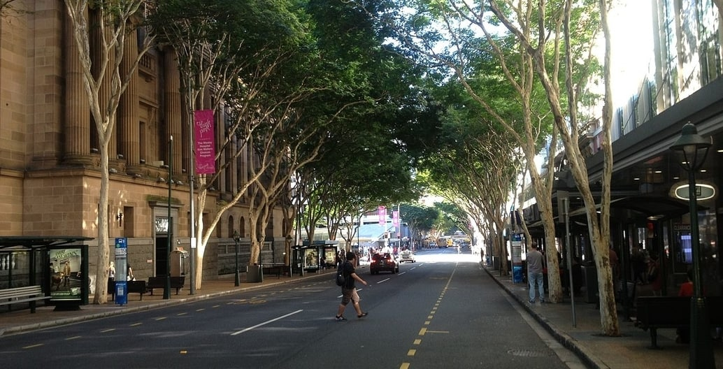 The tropical climate of Brisbane, Queensland encourages more vigorous street tree growth than elsewhere in Australia. Photo: kgbo1