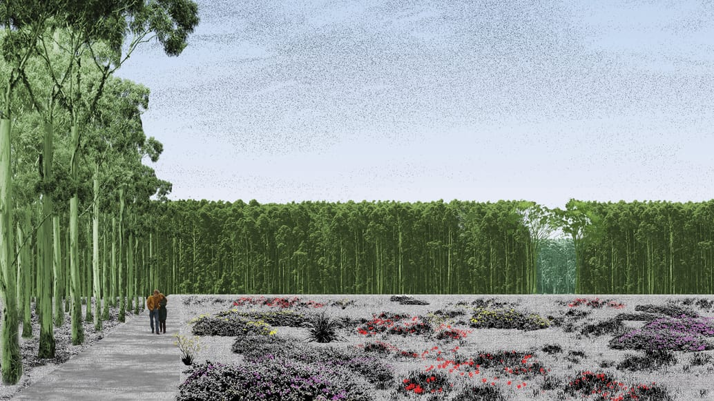 Clearings carved from the immensity of the forested Burial Belt could feature floral revegetation. Image: Other Architects