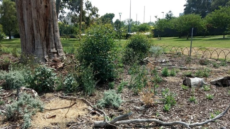 A fenced-off garden bed area beneath the dead tree is planted with indigenous species and trees grown from the trees seed. Photo: Jo Russell-Clarke