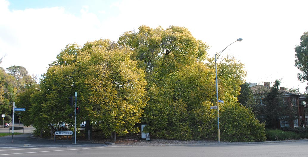 Golden Elm Punt Road