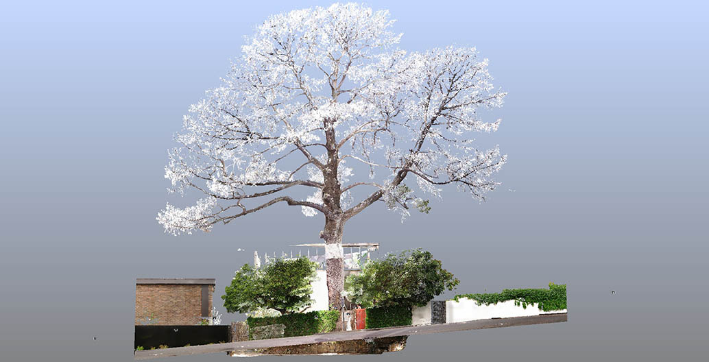 Point cloud scan of the Monterrey Pine at Boyd's house at 290 Walsh Street. Image: Yazid Ninsalam