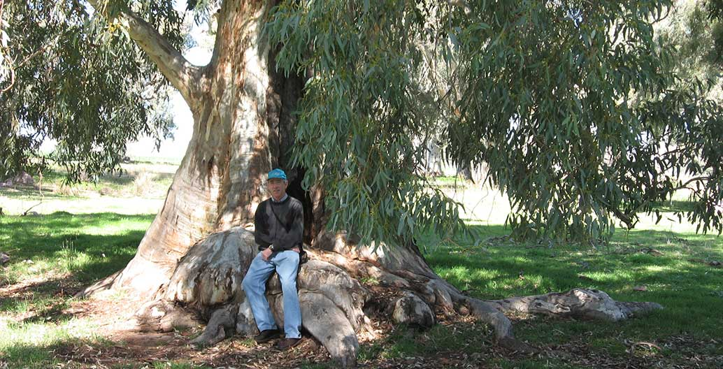 Dr Moore's view looks out across 400-year old river red gums in Burbank Park in Keilor. Image: supplied