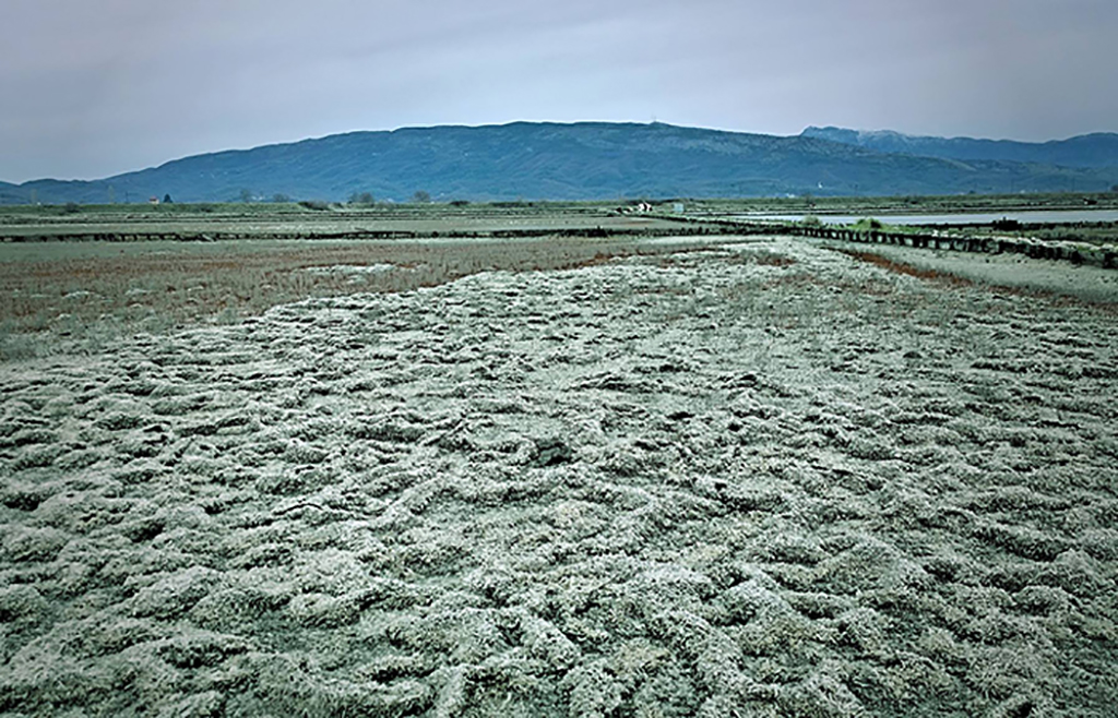 An abandoned salt farm in Montenegro, which ash become an important stopover point for migrating birds.