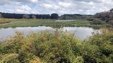 The thriving, regenerated wetland at the Fentons' farm, Lanark. Photo: David Hay
