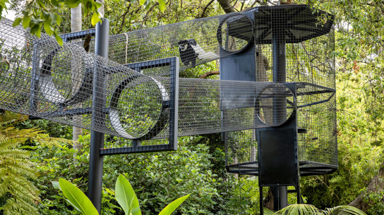 The tunnel replicates routes traveled by the monkeys in their natural forest habitats.