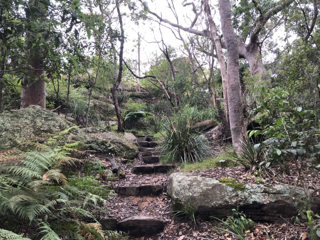 Walking track in Keep Reserve below The Rampart, Castlecrag, 2020. It is part of a very extensive network of walking tracks that connect a wide range of vegetation types ranging from bushland with Angophoras to Coachwood forest and fern-lined gullies. Photo Adrienne Kabos