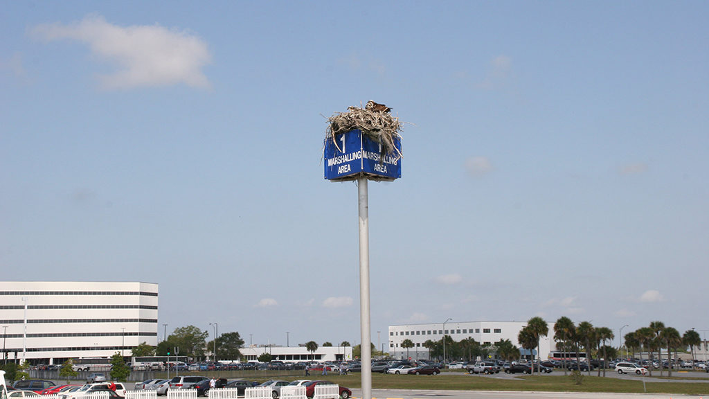 Birds nesting in a carpark. Image: DLR, CC-BY
