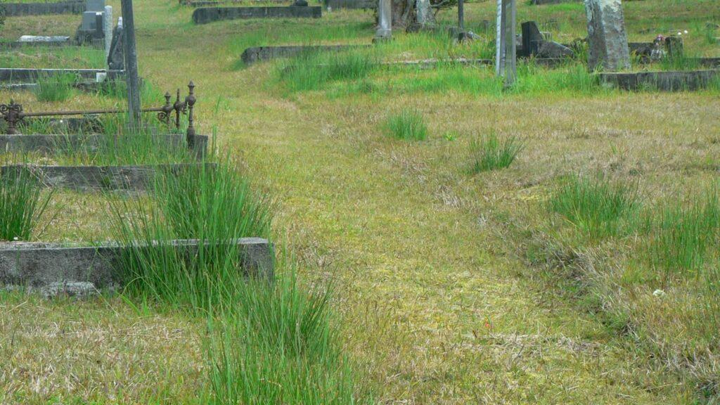 Water creates variation in the vegetation in Waikumete Cemetery, Auckland.